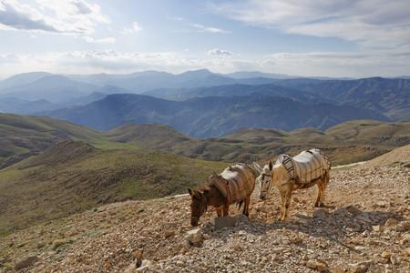 Turkey, Anatolia, two donkeys on Mount Nemrut LANG_EVOIMAGES