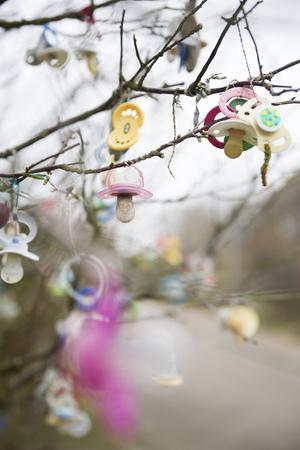 Germany, Lower Saxony, East Friesland, Langeoog, pacifiers hanging on tree LANG_EVOIMAGES