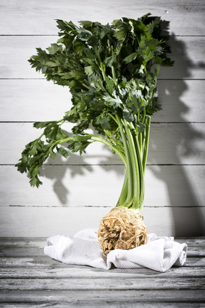 Root celery, Apium graveolens, standing on white cloth in front of wooden wall