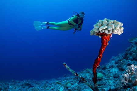 Oceania, Palau, female diver watching leftover of dead coral with new life on top LANG_EVOIMAGES