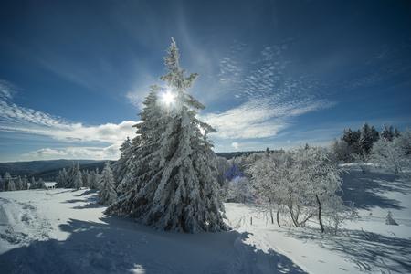 Germany, Baden-Wuerttemberg, Black Forest, Feldberg, trees in winter LANG_EVOIMAGES