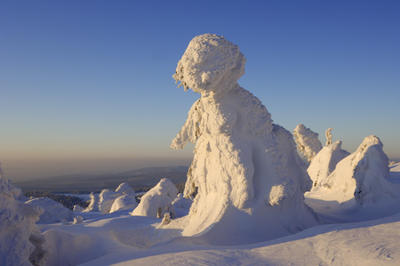 Germany, Saxony-Anhalt, Snow-Covered Norway Spruce Trees, Picea Abies, At Brocken Mountain