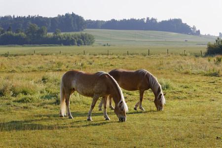 Germany, Bavaria, Horses On Paddock Near Rins
