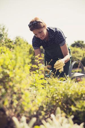 Mature Woman Gardening LANG_EVOIMAGES