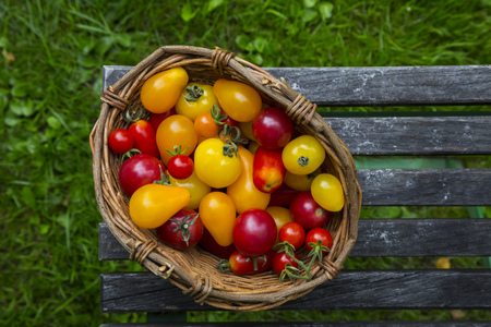 Basket Of Different Organic Heirloom Tomatoes On Wooden Table In The Garden