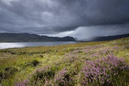 United Kingdom, Scotland, Highlands, Loch Eriboll, Heath LANG_EVOIMAGES