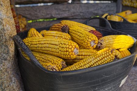 Spain, Galicia, Leis De Nemancos, Plastic Box Of Corn Cobs At Horreo
