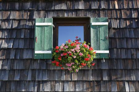Cranesbill In Window