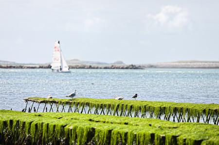 France, Brittany, Finistere, Landeda, Oyster Farming