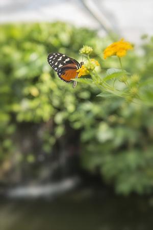 Germany, Baden-Wuerttemberg, Island Mainau, butterfly in butterfly house