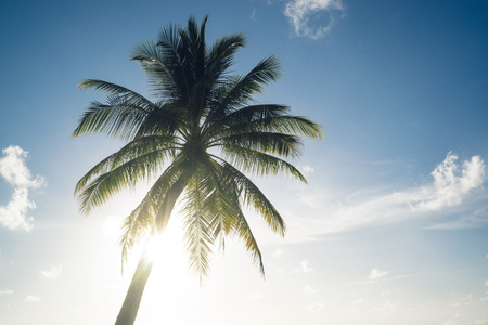 Maldives, Ari Atoll, view to palm in front of sunny sky LANG_EVOIMAGES