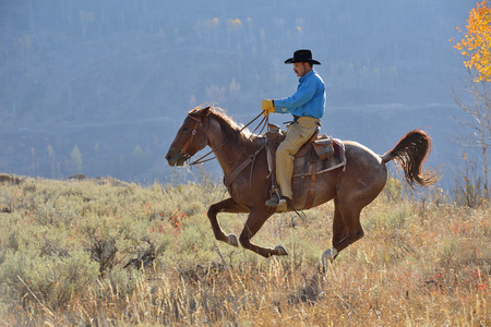USA, Wyoming, Big Horn Mountains, riding cowboy in autumn LANG_EVOIMAGES