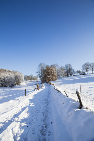 Germany, Kaiserslautern district, Palatinate Forest, footpath in winter