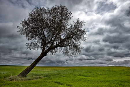 Spain, Province of Zamora, warped tree under cloudy sky LANG_EVOIMAGES