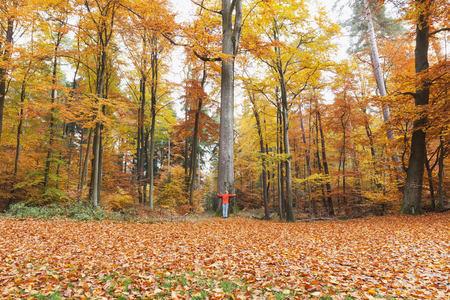 Germany, Rhineland Palatinate, woman embracing tree in autumnal  Palatinate Forest