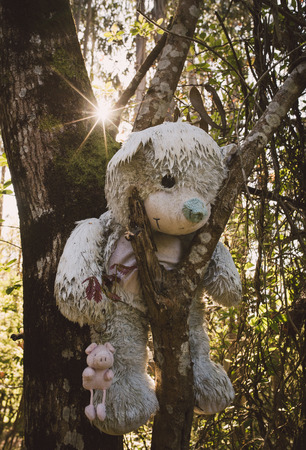 Disturbing teddy bear hanging on a tree in the forest