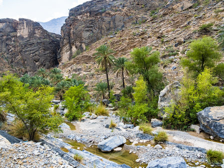 Oman, Jebel Akhdar, Al Batinah, panoramic view of Wadi Bani Awf