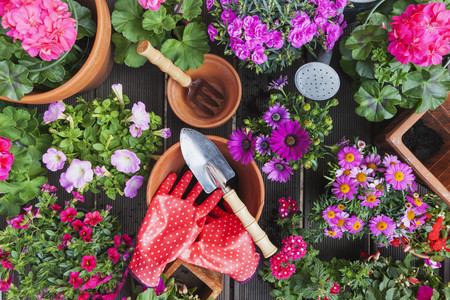 Gardening, different spring and summer flowers, gardening tools on garden table