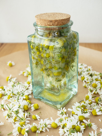 Making a tincture with German chamomile, water and wodka