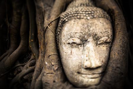 Thailand, Ayutthaya, head of sandstone Buddha between tree roots at Wat Mahathat