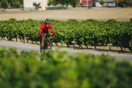 Spain, Andalusia, Jerez de la Frontera, man on a bicycle on a road between vineyards LANG_EVOIMAGES