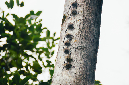 Peru, Tambopata, Group of bats sitting on a tree trunk