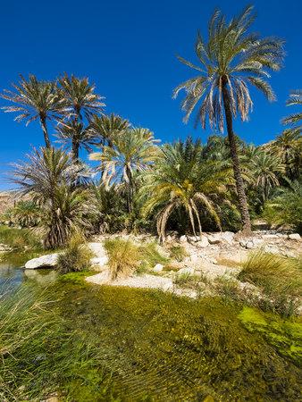 Oman, Sharqiyah, palms at Wadi Bani Khalid LANG_EVOIMAGES