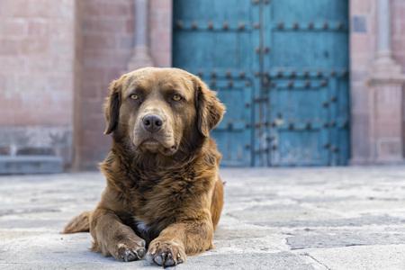 Peru, Cusco, stray dog LANG_EVOIMAGES