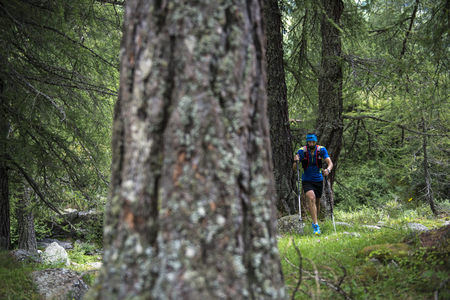 Italy, Alagna, trail runner on the move in forest