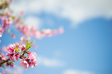 Pink peach blossoms against sky, close-up LANG_EVOIMAGES