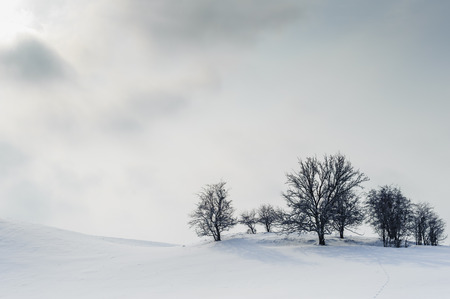 harsh: Harsh winter landscape with visible trees on the top of the hill, sun and clouds in the white sky