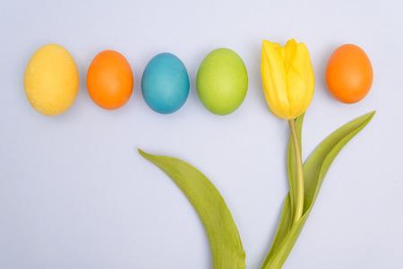 Funny, joyful, amusing photo of Easter multicoloured eggs against blue uniform background and yellow tulip  photo