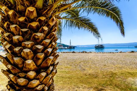 Exotische Palmen mit scharfen Stamm-Muster und großen grünen Blättern und sichtbaren Passagierschiff Überschrift zum Hafen, Foto wurde am sonnigen Tag, im Hintergrund sichtbar wolkenlosen Himmel Platz für Text Standard-Bild