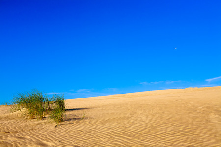 lonelyness: Photo presents sandy dune with visible green plants , in background blue cloudless sky  Stock Photo
