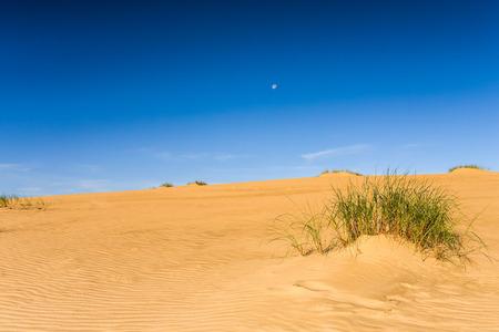 Foto präsentiert Sanddüne mit sichtbaren grünen Pflanzen im Hintergrund blauen wolkenlosen Himmel