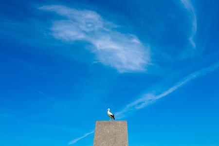 Alte Storch auf steinigem Pfosten sitzt blauen Himmel mit weißen Wolken Hintergrund, Platz für Text Nagainst.