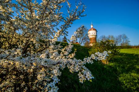 Foto präsentiert weißen Kirschblüte in der Front, im Hintergrund sichtbar Wasserturm mit Sonnenlicht beleuchtet Standard-Bild