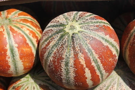 Cucumis melo var cantapulensis, H ogen, cantaloupe with yellow, orange to finally brown skin with broad green stripes  The flesh is light greenish-white, sweet and juicy  Used as table fruit