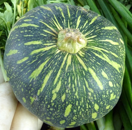 Cucurbita moschata, commonly sold in Indian markets under the name kadu, petha or sita phal  young fruit green with yellowish-white patches  Flesh initially light yellow turning orange yellow when ripe  Commonly cooked as vegetable   Stock Photo