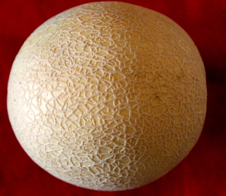 Muskmelon, Cucumis melo var  cantapulensis, sold in India in summer under name kharbuza  Fruit is 1-2 kg, with rough closely netted yellow to brown skin and orange yellow juicy flesh  Used as table fruit