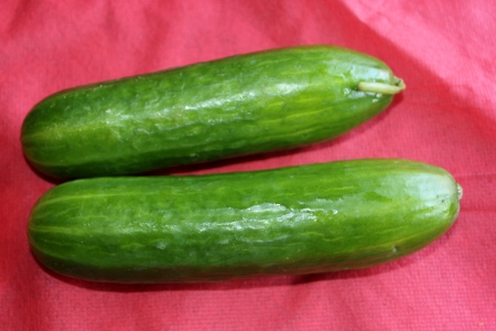 bumpy: Persian cucumber, Cucumis sativus, burpless thin skinned cucumber with bumpy skin, consumed without removing skin