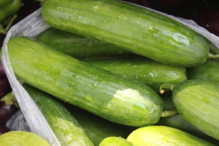 shorter: Persian cucumber, Cucumis sativus, burpless thin skinned cucumber with bumpy skin, consumed without removing skin
