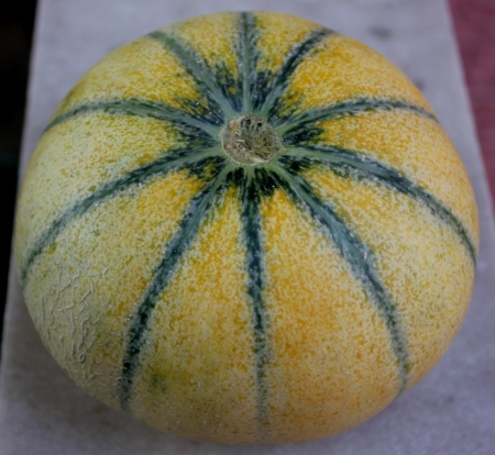 Charentais, Cucumis melo var  cantapulensis, a cantaloupe with ivory grey to yellow skin with green stripes, yellow sweet and delicious flesh