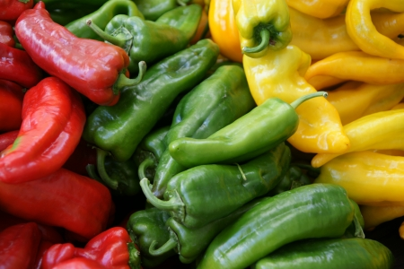 Corno di toro, Capsicum annuum, sweet stuffing pepper often more than 20 cm long, turning yellow and then red when ripe, eaten fresh, stuffed or roasted