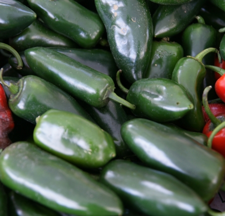 jalapeno pepper: Jalapeno pepper, Capsicum annuum, Mexican pepper, dark green in colour, turning red when ripe, picked green and used in various cuisines  May be mild to hot