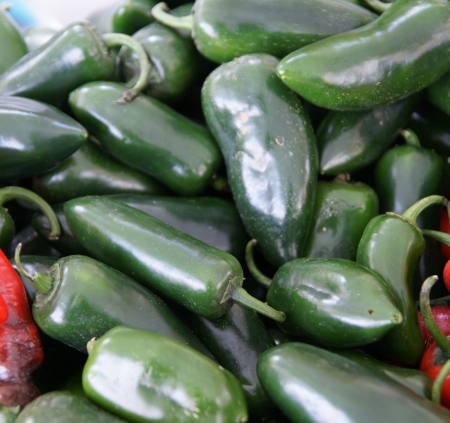 mild: Jalapeno pepper, Capsicum annuum, Mexican pepper, dark green in colour, turning red when ripe, picked green and used in various cuisines  May be mild to hot