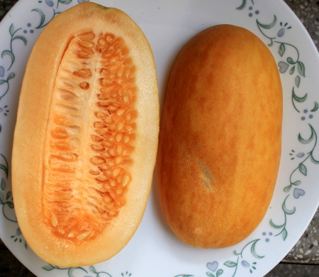 pinkish: Snap melon, phut, phoot, Cucumis melo susbp  agrestris var  momordica, native of India, young fruits with thicn cucumber like skin and taste, turning pinkish with light pinkish flesh when ripe  Eaten fresh, but somewhat bland