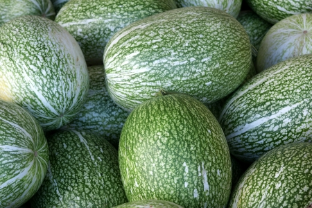 Chilacayota, shark-fin melon, Malabar gourd, Cucurbita ficifolia, with large oblong to spherical fruits having green skin with irregular white stripes  The flesh is white with black seeds