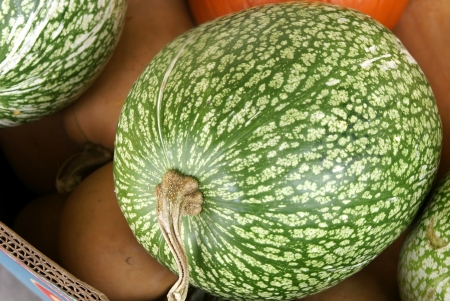 black seeds: Chilacayota, shark-fin melon, Malabar gourd, Cucurbita ficifolia, with large oblong to spherical fruits having green skin with irregular white stripes  The flesh is white with black seeds