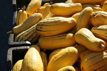 the oblong: Delicata squash, Cucurbita pepo, oblong to cylindrical small fruits with yellow skin and dark green stripes  The flesh is orange and sweet with delicate flavor